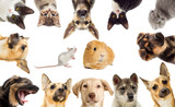 set pets - 73885681