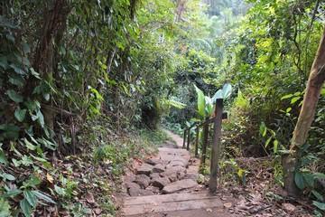 Brazil rainforest - Mata Atlantica forest in Trindade