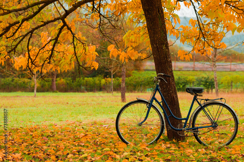 Vintage bicycle leaning against a tree and autumn leaves - 73888037