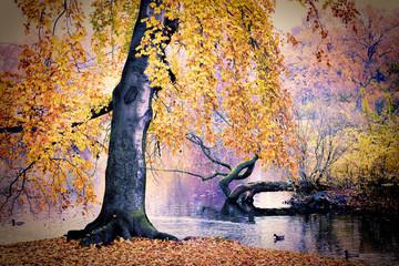 Pond in the park © satori