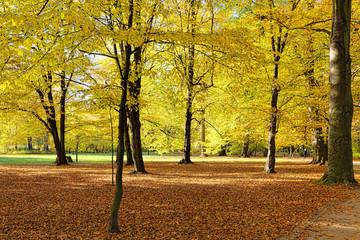 Fall in public park