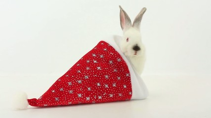 white rabbit with santa cap