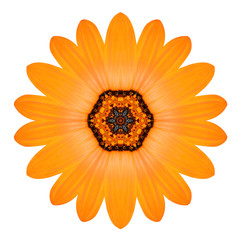 Orange Mandala Flower Ornament. Kaleidoscope Pattern Isolated