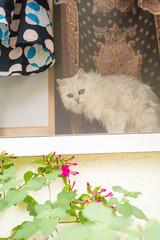 窓辺で花を見る白猫