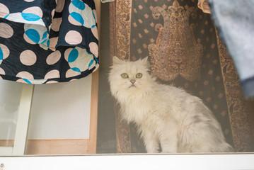 窓辺に座る白猫