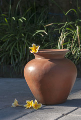 Traditional Indonesia clay pot with yellow frangipani flower