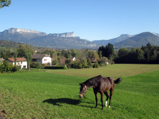 Brown horse in field in Savoy, France