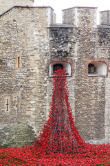 Ceramic poppies from the Tower of London's