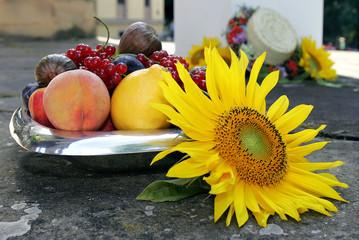 Sonnenblume und Früchte