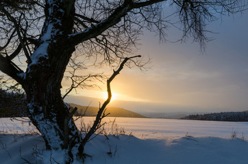 Landscape with snow and snowfall at sunset