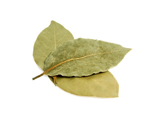 Laurel leaves isolated on white background
