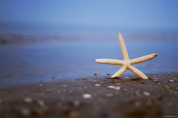 starfish in the sea