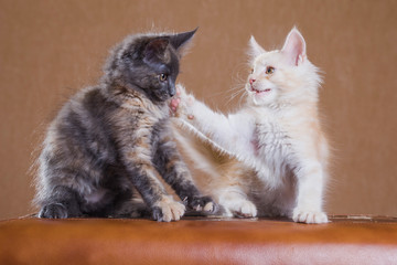 two kittens playing. Slap