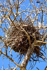 vecchio nido