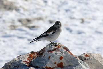 Oiseau en montagne