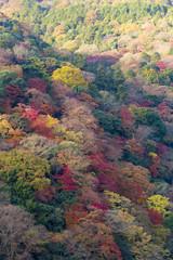 秋色の京都嵐山