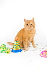 Katze in Partydeko