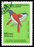 Bird Cianolanius madagascariensis. poster