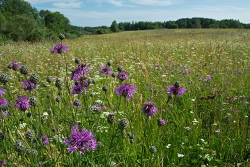 field flowers on grassland