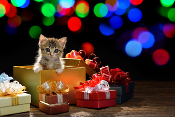 Funny kitten coming out of a gift box with bokeh background