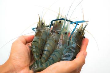 Shrimp on hand