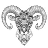 mountain sheep, argali, black and white ink drawing - 73916270