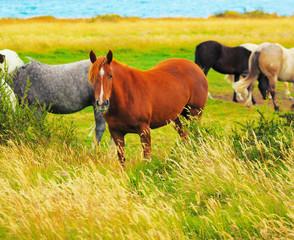 Gray, bay and black horses