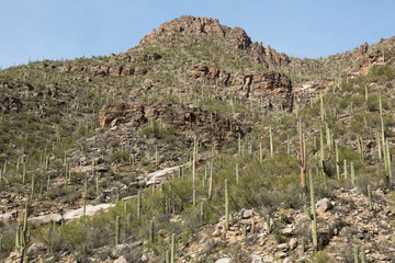 Cacti in the Canyon