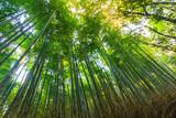 Bamboo Forest Arashiyama.