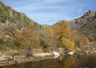 River in Sabino Canyon