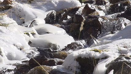 Brook Among Ice Build-up