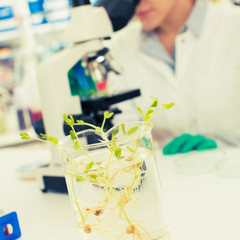 young woman biologist manipulates plants in genetic laboratory