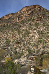 Tucson's Sabino Canyon
