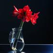 amaryllis flower in a jar