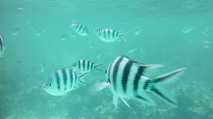 Underwater view of fishes on the coral reefs
