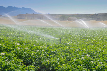 Irrigation sprinklers in a farm field (Spain)
