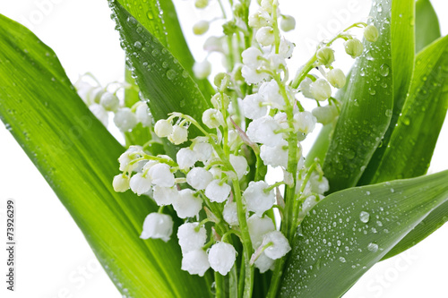 Papiers peints Muguet de mai Lily of the valley isolated on white