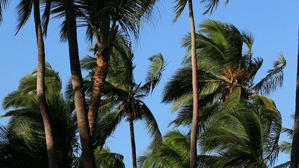 Palm trees blowing in the wind against a blue sky