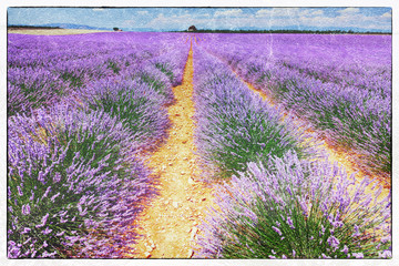 fresco style of the lavender field