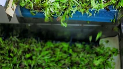 Selezione verdura - dosatore e confezionamento