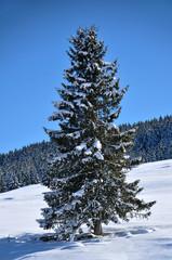 abete con la neve in montagna