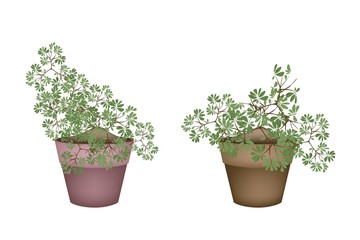 Two Green Trees and Plants in Ceramic Flower Pots