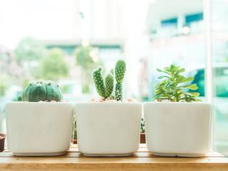 Adorable indoor cactus garden.