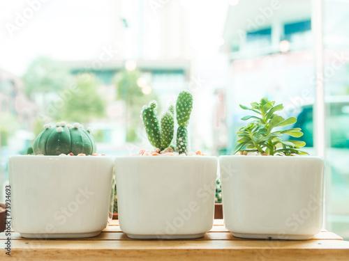 Canvas Cactus Adorable indoor cactus garden.