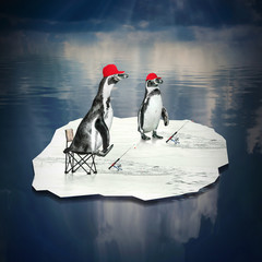 Two penguins floating and catching fish on a iceberg.