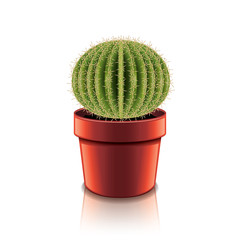 Cactus isolated on white vector
