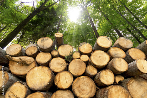 Wooden Logs with Forest on Background - 73937079