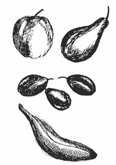 set of hand drawn fruits, apple, pear, plum, banana