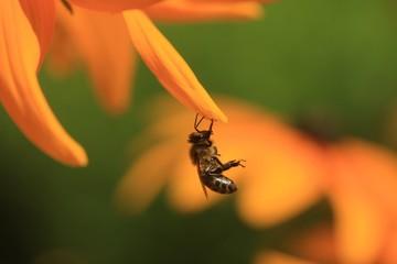 bee under flower