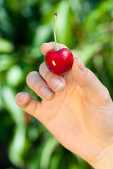 Red cherry in womans hand